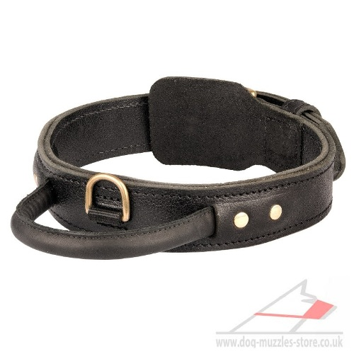 The Best Dog Collar with Handle