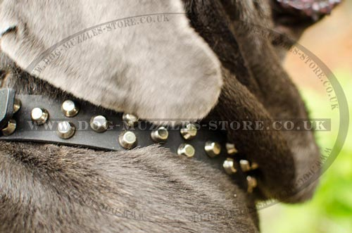Luxury Leather Dog Collars for Neapolitan Mastiff for Sale