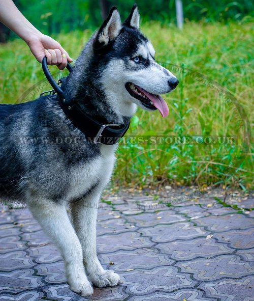 Leather Dog Collar for Husky Training