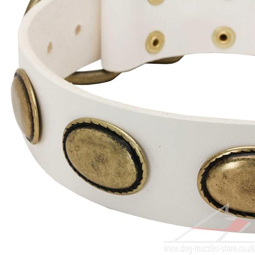 White dog collar UK
