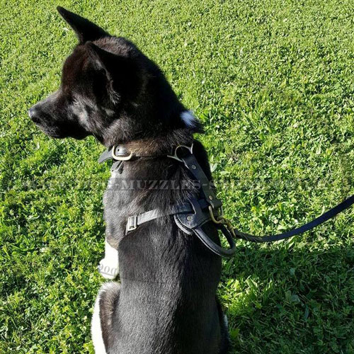 Leather Harness for Akita