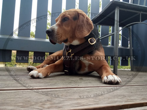 Beagle leather dog harness