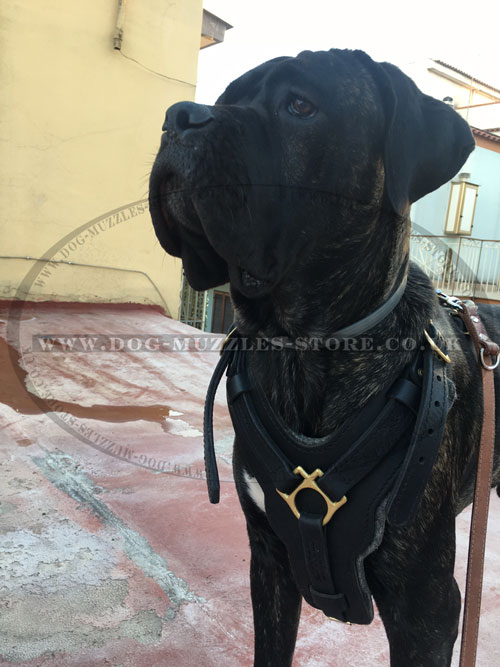 Large Dog Harness for Mastiff Breeds
