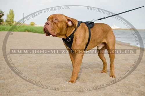 Dogue De Bordeaux Harness Bestseller UK