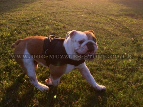 Best Nylon Dog Harness for English Bulldog
