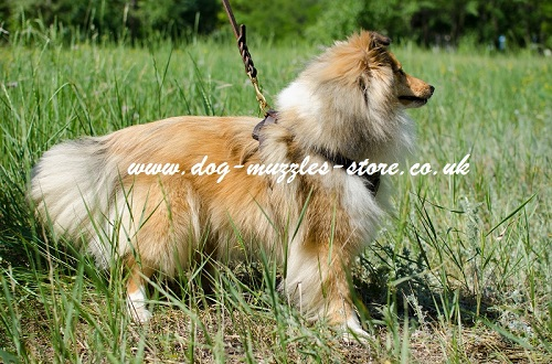 Best Dog Harness for Sheltie Dog
