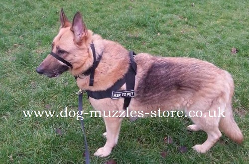 Buy German Shepherd harness uk