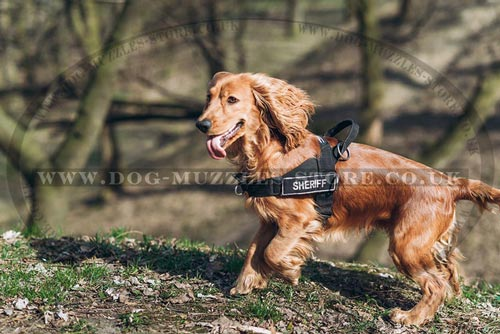 dog harness for Cocker Spaniel for sale uk