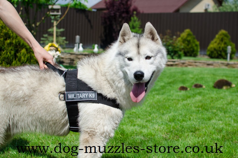 Non Pull Dog Harness Uk Best Front Clip Dog Harness 163 33 70