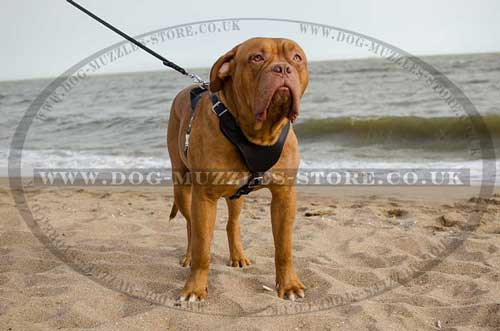 dog harnesses for dogue de bordeaux