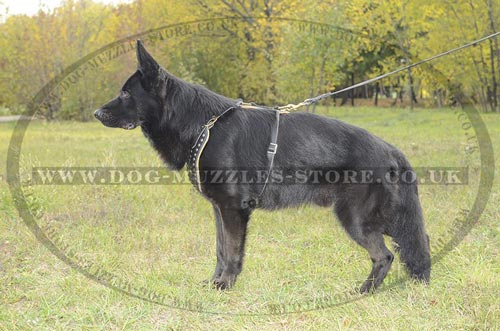 Designer Dog Harness for German Shepherd