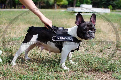 Non Pull Dog Harness for French Bulldog