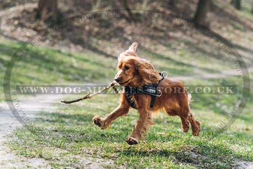 Cocker Spaniel best harness