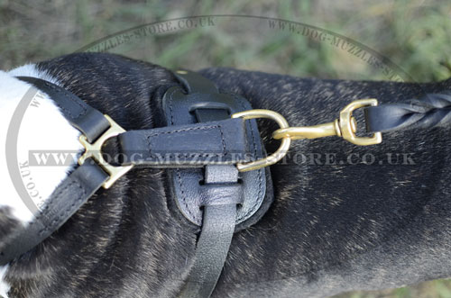english bull terrier leather dog harness uk