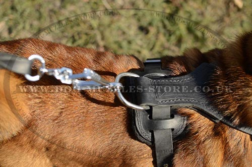 Leather Dog Harness for Shar Pei Dogs