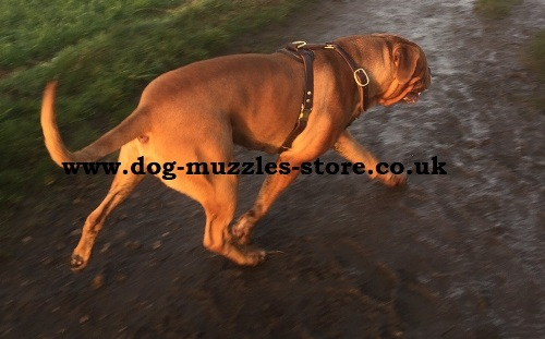 leather dog harness for sale uk