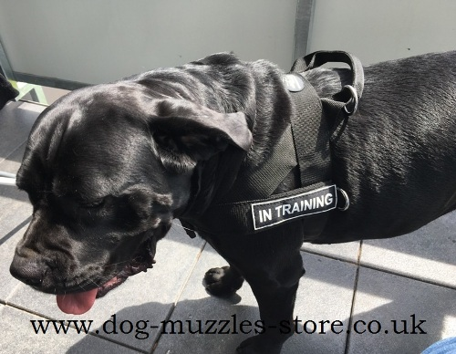Stop Pull Dog Harness for Cane Corso