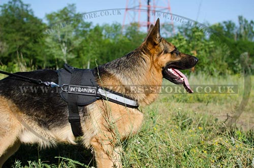 German Shepherd training nylon harness