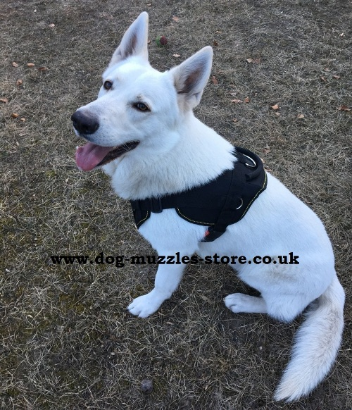 buy padded nylon dog harness
