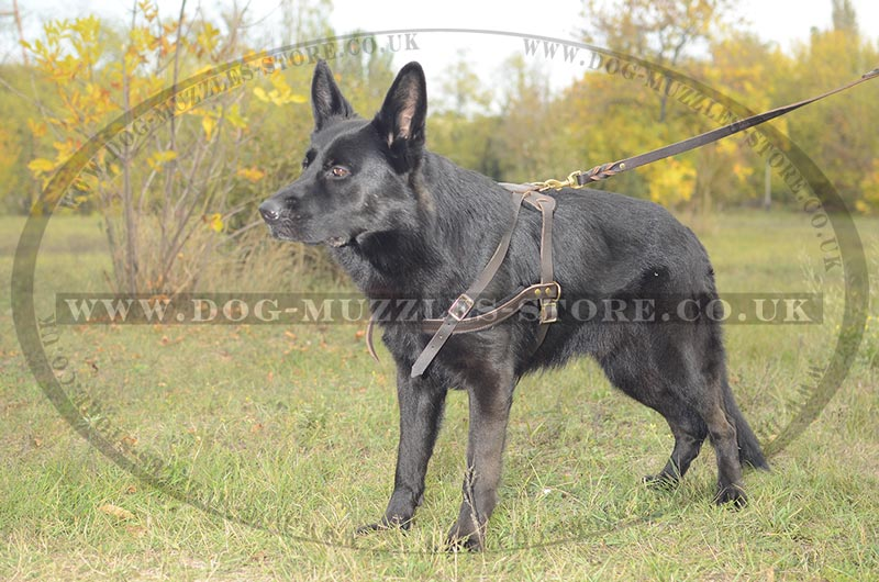 German Shepherd pulling dog harness