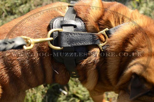 Shar Pei harness