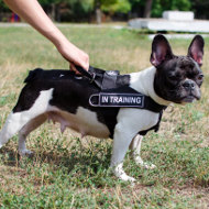 Top Choice! No Pull Dog Harness for French Bulldog UK Bestseller