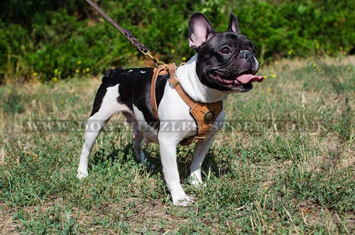 French Bulldog Harness Leather