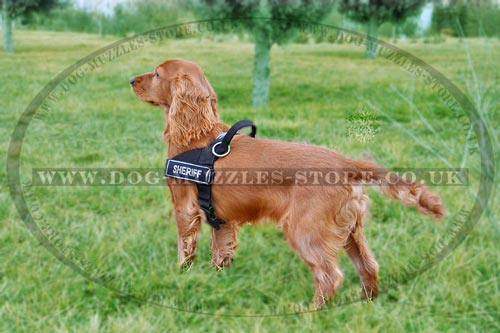 best dog harness for Cocker Spaniel walking