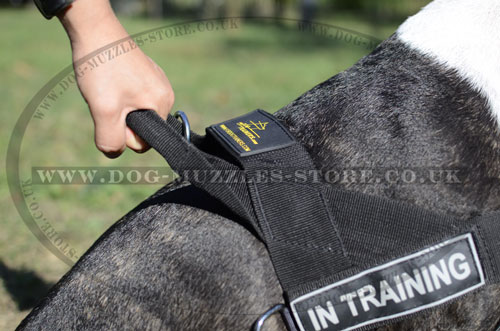 Buy English Bull Terrier Harness with Handle