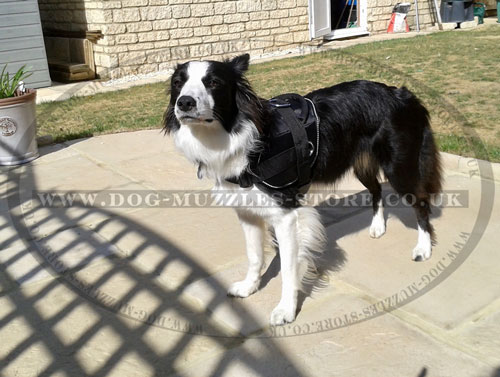 Nylon Dog Harness for Collie