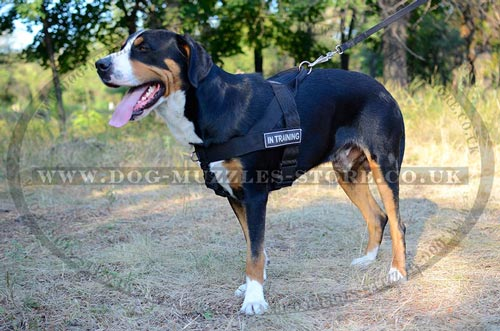 stop pull dog harness for Swiss Mountain Dog