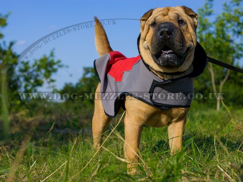 The Best Warm Dog Coat for Shar Pei