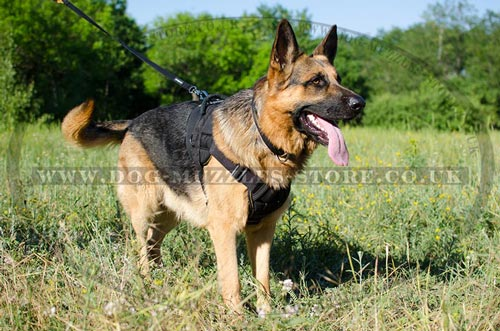 German Shepherd Training Dog Harness UK