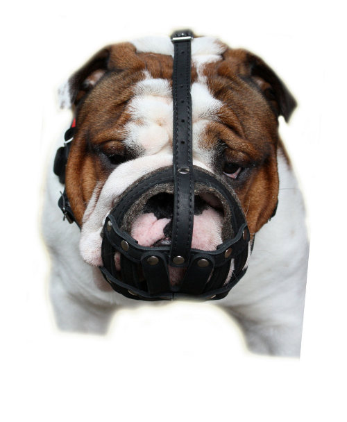 English Bulldog Muzzles