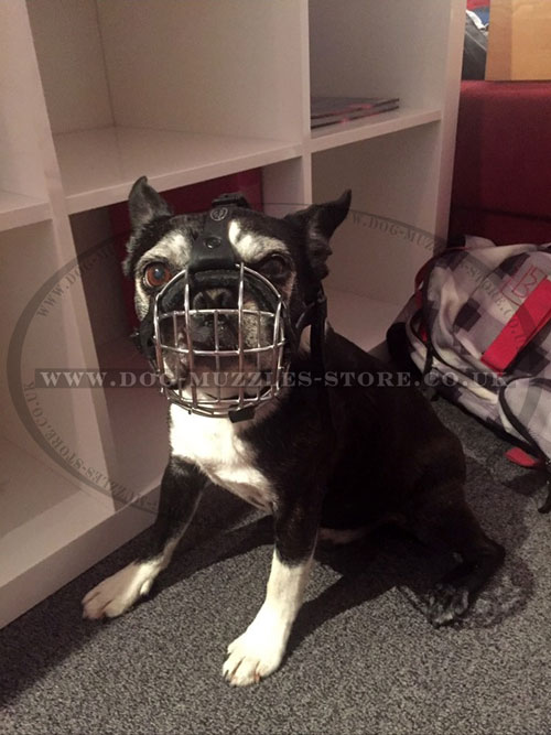 Flat Face Dog Muzzle for Boston Terrier