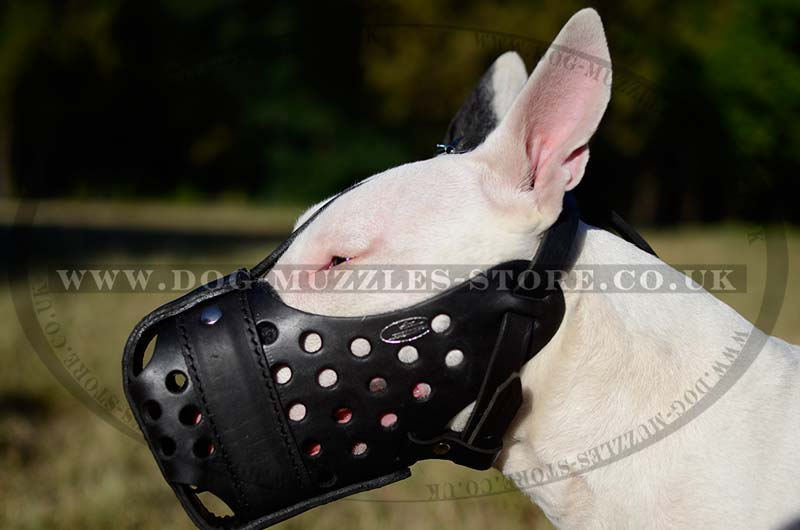Attack Leather Muzzle For Bullterrier