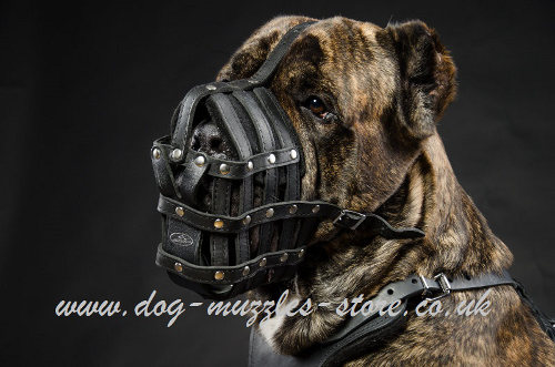 Muzzles for Large Dogs