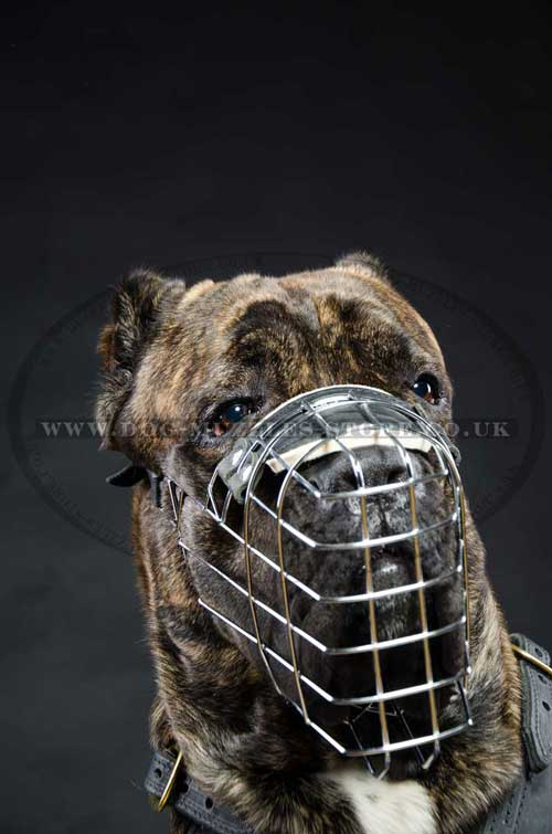Large dog muzzle for universal use