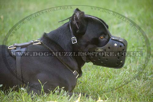 Cane Corsos Dog Muzzle for K9 Dogs