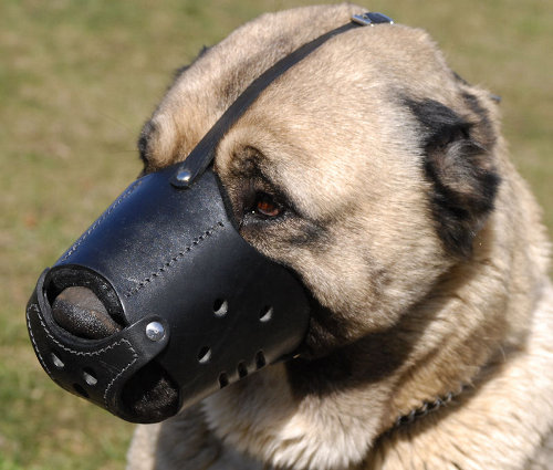 Leather Dog Muzzle for Caucasian Shepherd Training