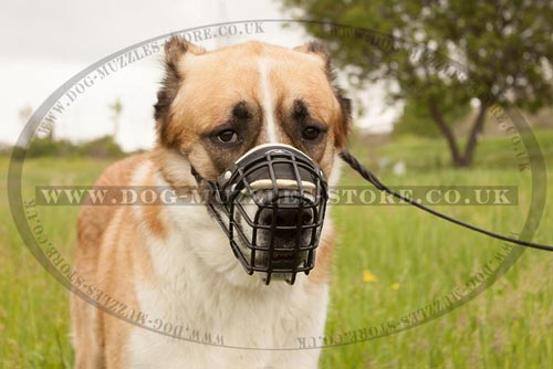 Large Dog Muzzle for Central Asian Shepherd Dog