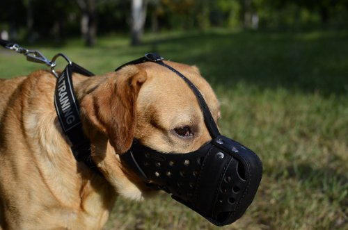 best dog muzzle types uk