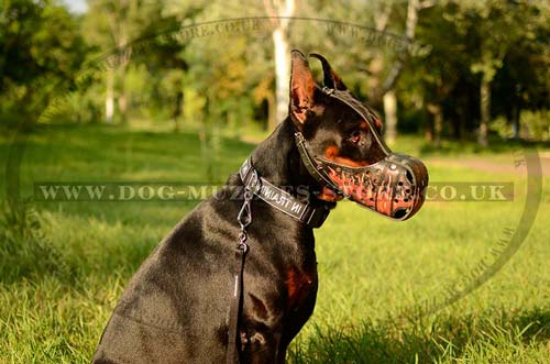 The Best Dog Breeds For Family And Home Guard The Best Dog Muzzles Online Dog Muzzles For All