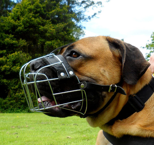 Boerboels Padded WIre Basket Muzzle