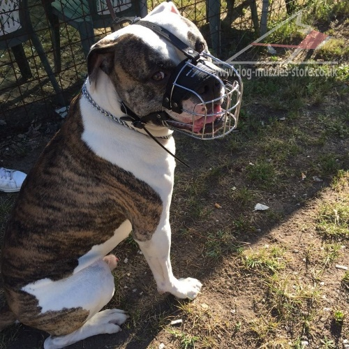 Dog Wire Muzzle for American Bulldog