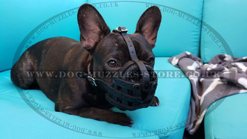 french bulldog basket muzzle for sale