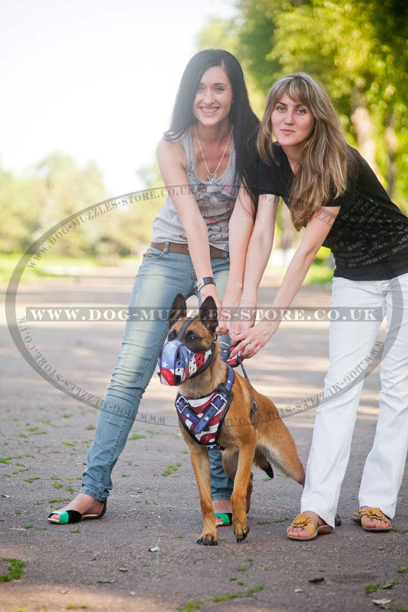 Designer dog harness UK Bestseller
