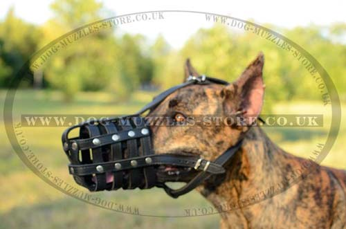 Great Dane Muzzle