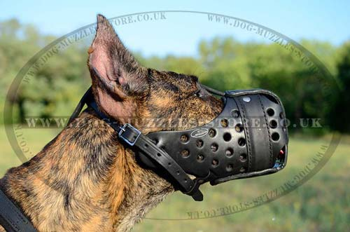Great Dane Training Muzzle