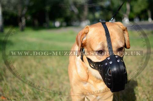 Leather Dog Muzzle for Large Dog Breeds